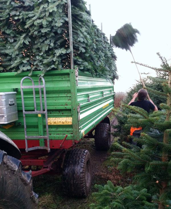 Weihnachtsbäume - Laden von Tannengrün
