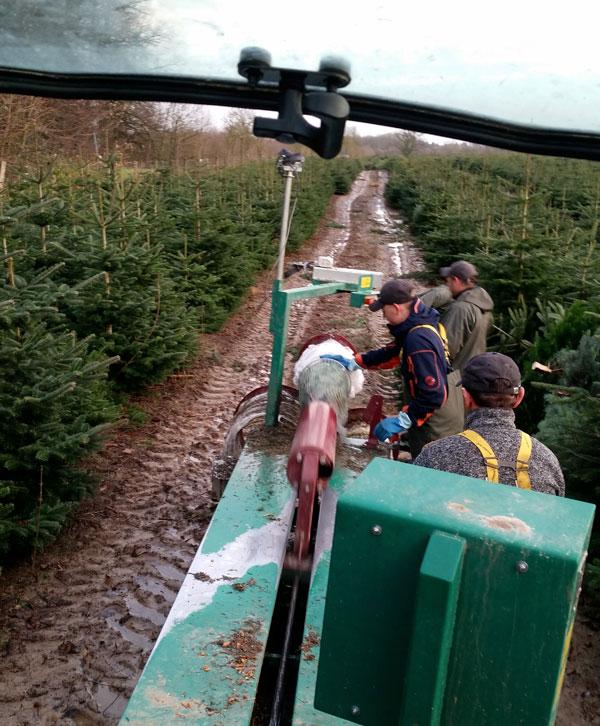 Netzen von Weihnachtsbäumen